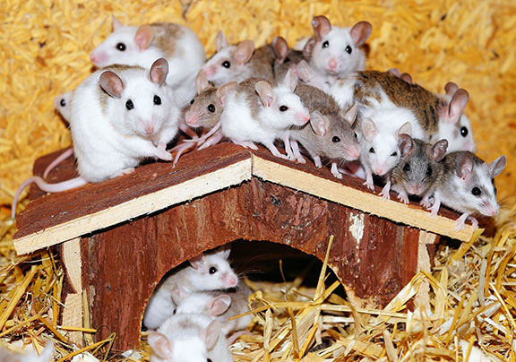 mice-top-of-roof-small-house