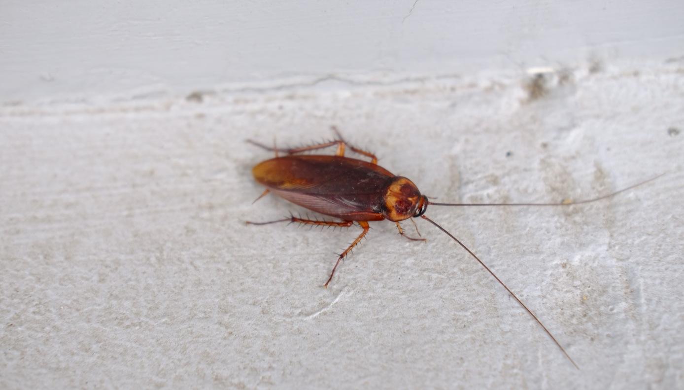 pest control services - roach season