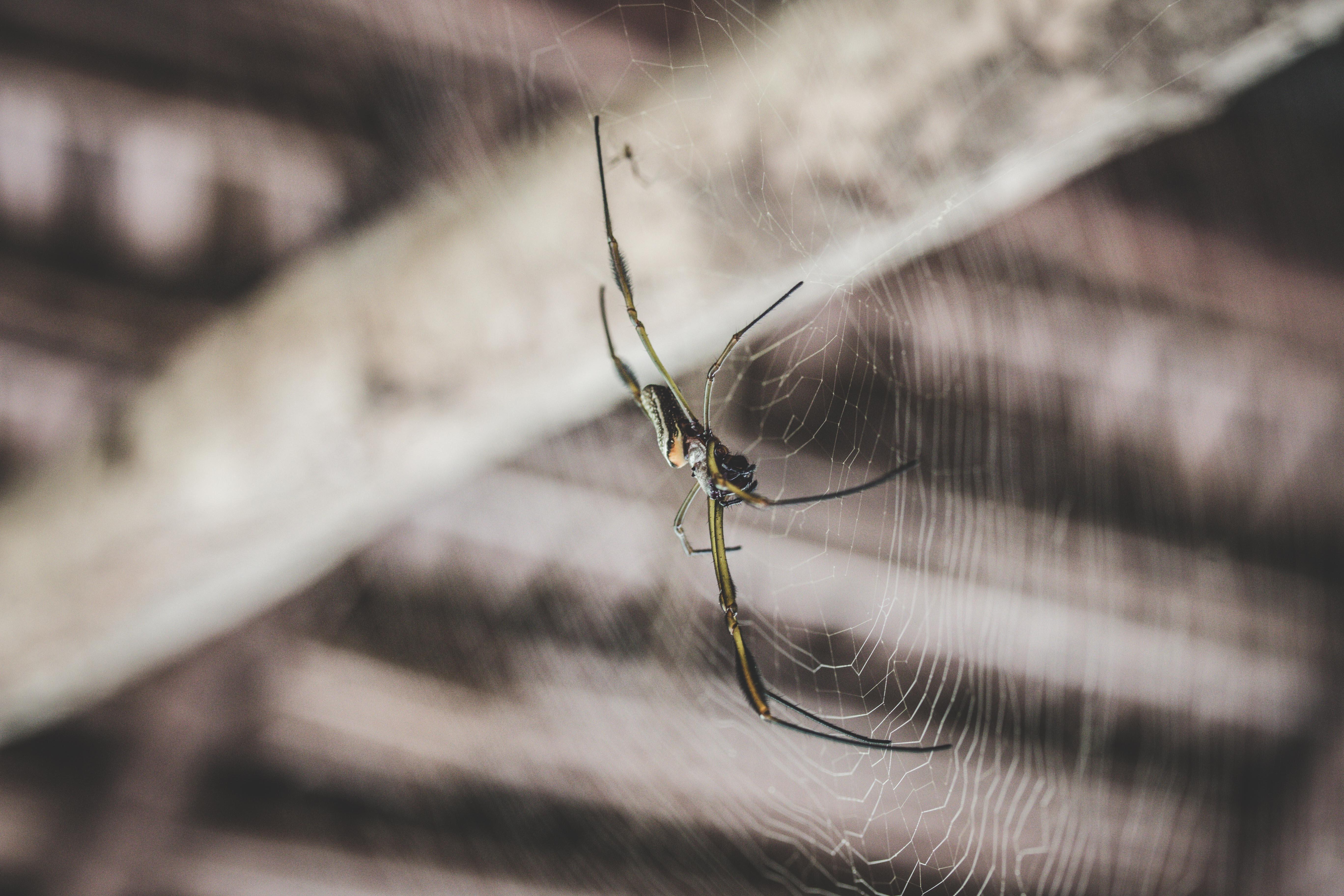 Spider Infestations