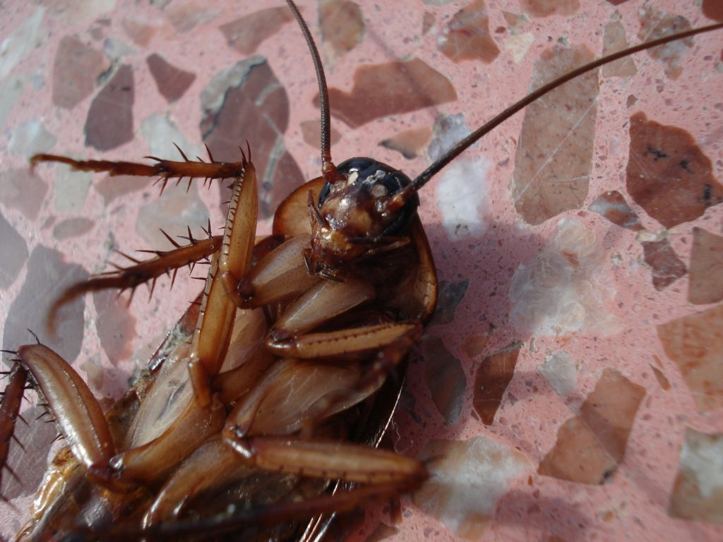 Dead Cockroaches Found in New Home