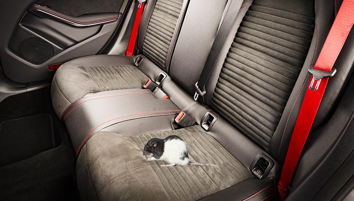 rat-infestation-in-your-car