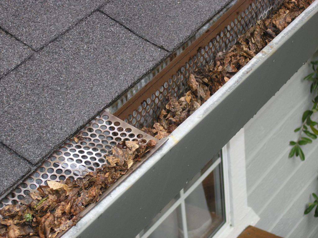 gutter winter pest prevention