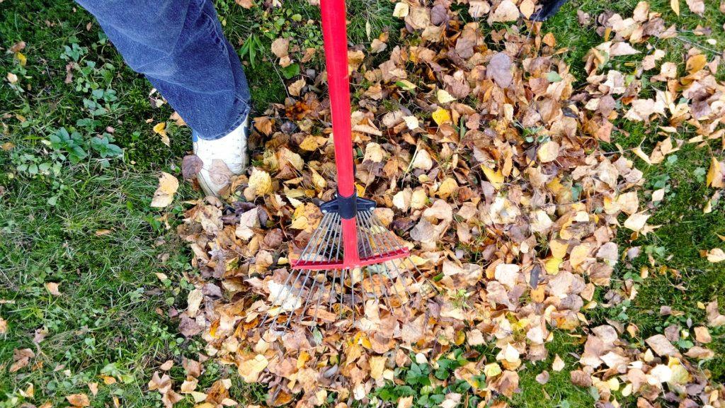 leaf pile pest prevention