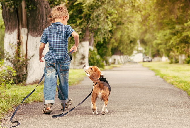 boy-walking-dog